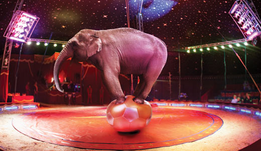 Elephant balancing on ball