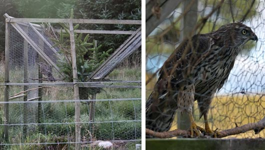 Crow cage trap illegally set