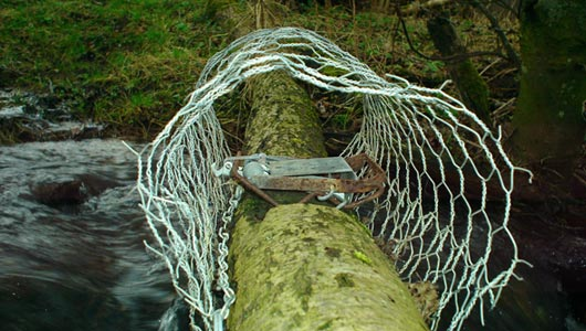 Fen trap illegally set