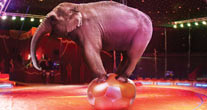 Help us end animal circuses