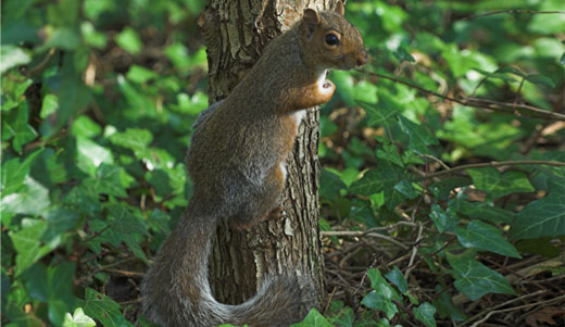 Amazing Facts about Squirrels | OneKindPlanet Animal Education & Facts