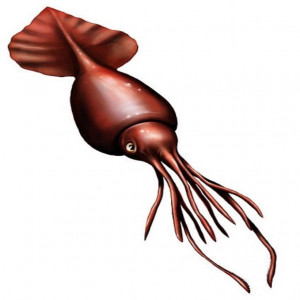 amazing facts about the colossal squid | onekindplanet animal facts