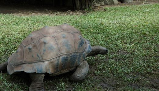 galapagos-giant-tortoise-cindi-andrie