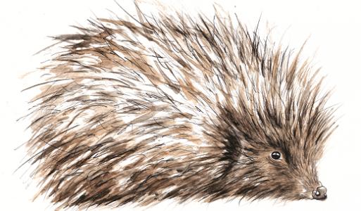 hedgehog_clare_baird