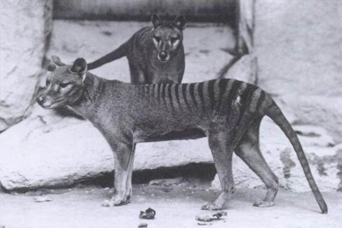 Weird Extinct Animals 8