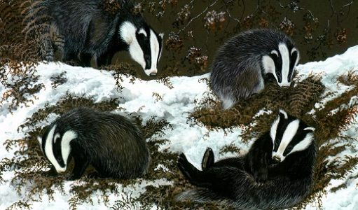 badgers_jan_ferguson