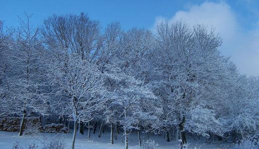 wintertreesweb1