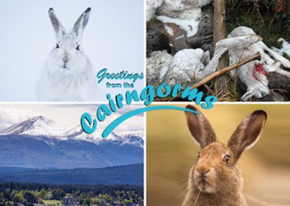OneKind Mountain hare postcard