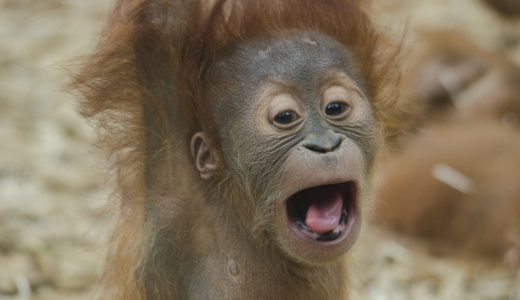 Be AnimalKind: Shop responsibly this International Orangutan Day