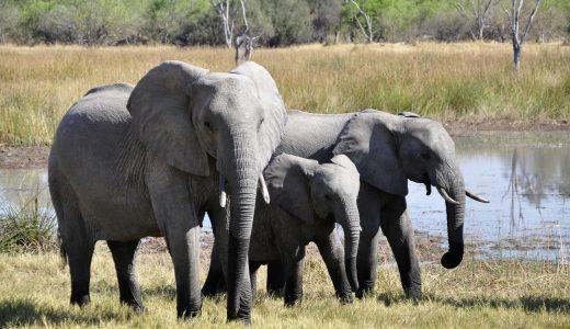 3 ways to be elephant ethical this World Elephant Day