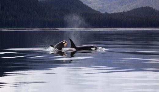 Why we shouldn't keep killer whales in captivity