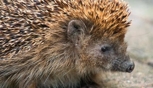 Time for bed: interesting facts about hibernation