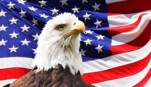 Fascinating facts about the bald eagle for National American Eagle Day