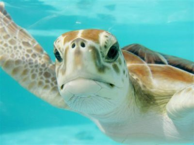 Sea turtle for World Sea Turtle Day