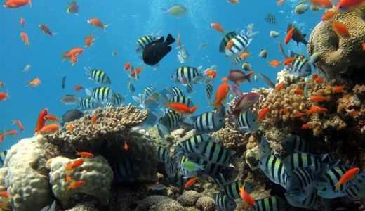 Caring for coral: Coral Reef Awareness Week 2018