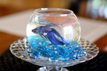 Live fish centrepiece