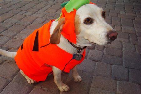 Dog in halloween costume