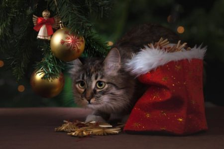 Why You Shouldn T Give Animals For Christmas Onekind Planet Blog