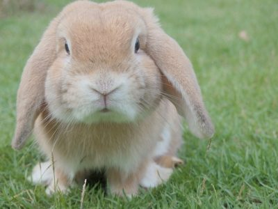 Rabbit. A rabbit is not just for easter