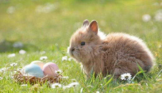 A rabbit is not just for easter