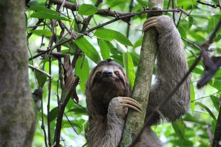 Sloth, wildlife wonders of the world