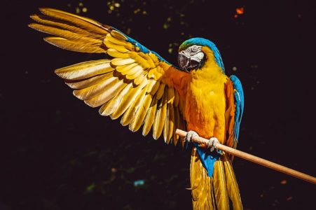 Macaw - wildlife wonders of the world, birds