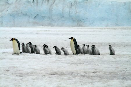 Penguin - wildlife wonders of the world, birds