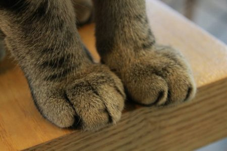 Cat paws - stop declawing cats campaign
