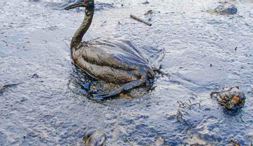 Oil spill - animals and man-made disasters