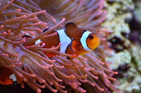 wildlife wonders - fish
