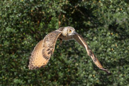 Stop tethering of birds of prey