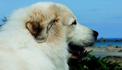 Dog - Choosing the right dog breed for your lifestyle