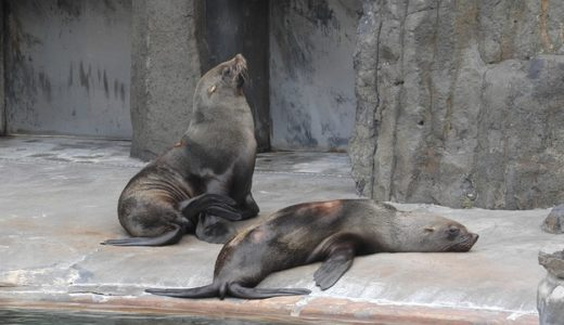 Sea lions in captivity