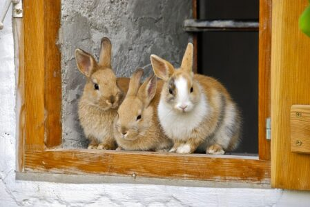 Three rabbits - things you need to know before getting a rabbit this Easter.