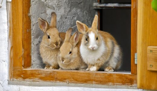 Three rabbits in a doorway - things you need to think about before getting a rabbit.