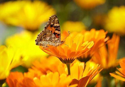 Butterfly on a flower - nature garden