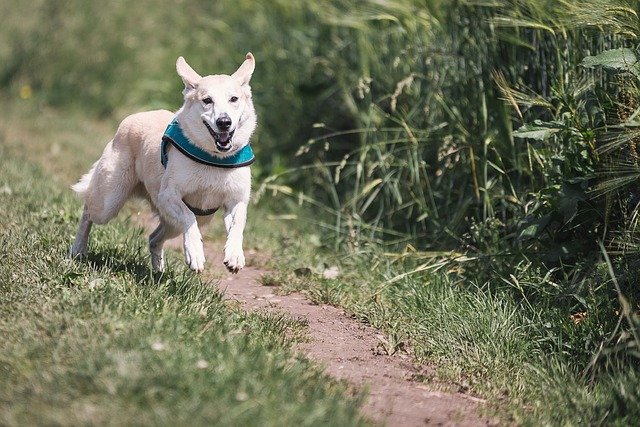Dog in the countryside - how to behave correctly in the countryside