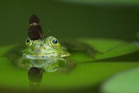 Frog & butterfly - creating a wildlife pond.