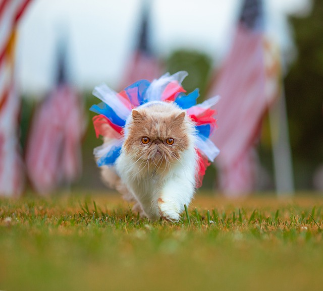 Cat - 4th of July