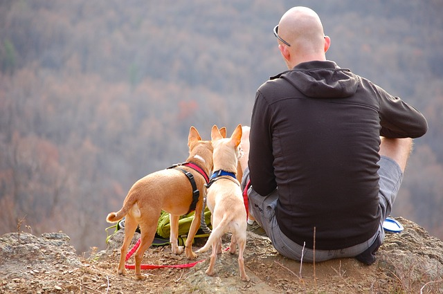Camping with companion animals